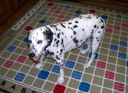 Scrabble Rug with dog.